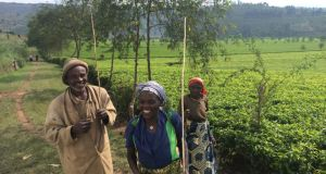 People at work at the Sorwathe Tea Plantation, 90 minutes from the Rwandan capital of Kigali. Photograph: Conor Pope