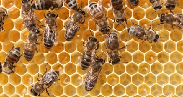 Will insurance cover removal of bees' nest?