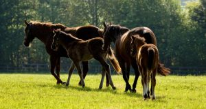 The Department of Agriculture has advised horse owners to avoid overgrazing of pastures and remove horses from pastures where sycamore and other maple trees are growing to stem the outbreak of equine atypical myopathy.