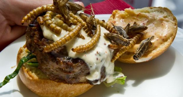 the future of food from insect burgers to smart fridges