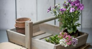 A Colworth Flower trug from Quickcrop in Sligo