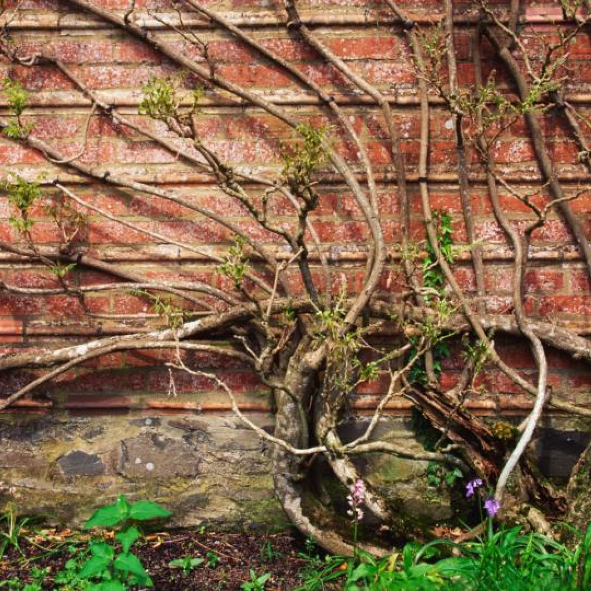 Confused About Planning Regulations For Height Of Garden Wall