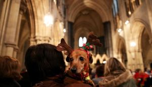 Tippi, a Dachshund cross, is held by her owner during the annual Peata dog carol service in Christ Church Cathedral, Dublin, last week. Photograph: Brian Lawless/PA