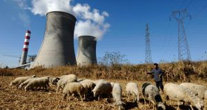 Carbon control: a farmer grazes sheep by a power plant near China's Changzhi, in Shanxi province. The amount of coal being burned in China has fallen for the first time since 2000 – good news for the environment. Photograph: Reuters
