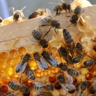 The Bí project involves setting up bait hives around the northwest inner city to attract bees. Photograph: Alan Betson/Irish Times