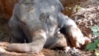 Having slipped into a two metre deep pit, an elephant calf needed some help from locals and the police to get back out. Video: Reuters