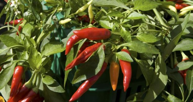 Grow: bring the chilli club to your garden