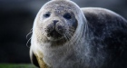 Seal the deal: marooned pup makes it back to Irish sea