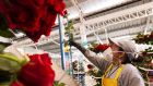 Wear a mask: A worker at a flower plantation in Ecuador prepares for Valentine's Day. Photograph: Guillermo Granja/Reuters