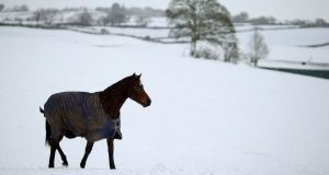 A horse in a field just outside Ballynahinch, Co Down. Photograph: Brian Lawless/PA Wire