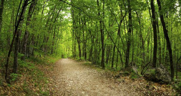 Go Walk: Raheenleagh Wood to Croghan Mountain, Co Wexford/Co Wicklow