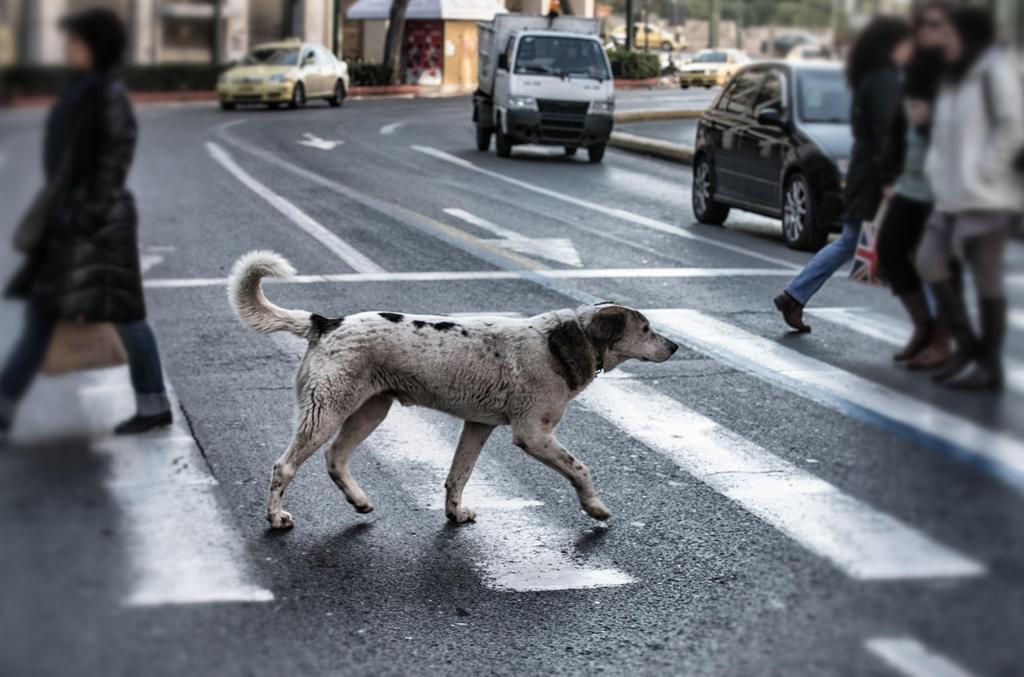 dog photo road - photo #22
