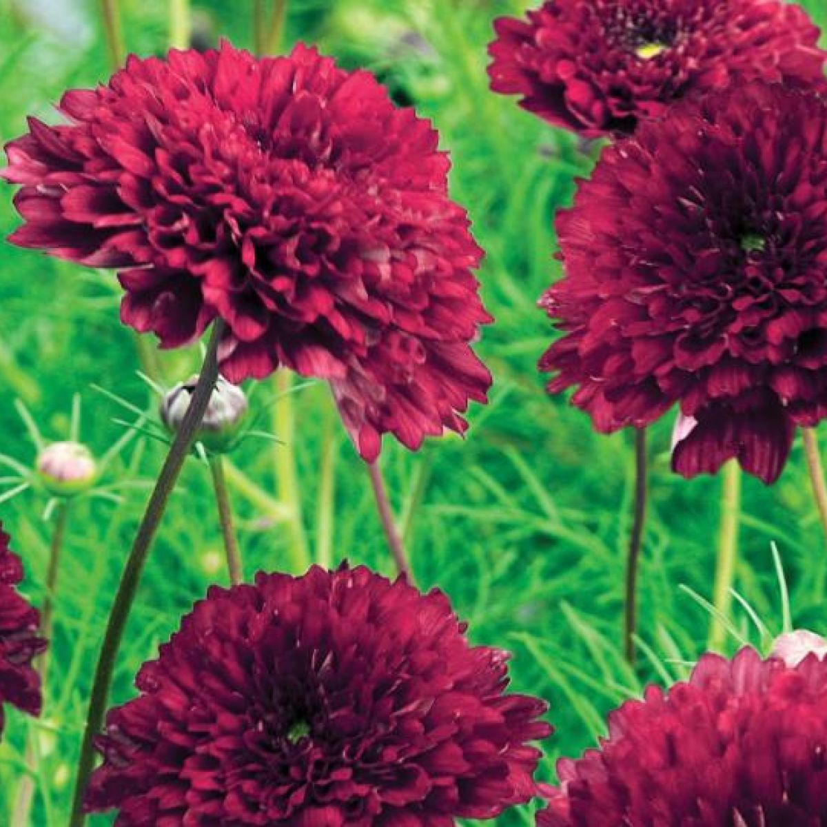 Use summer annuals to add fun to your garden izmirmasajfo