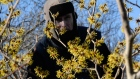 Artist Brien Vahey brings in spring by painting witch hazel at his home in Co Wicklow. Video: Cyril Byrne