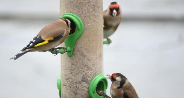 App set to help birdwatchers identify species based on song