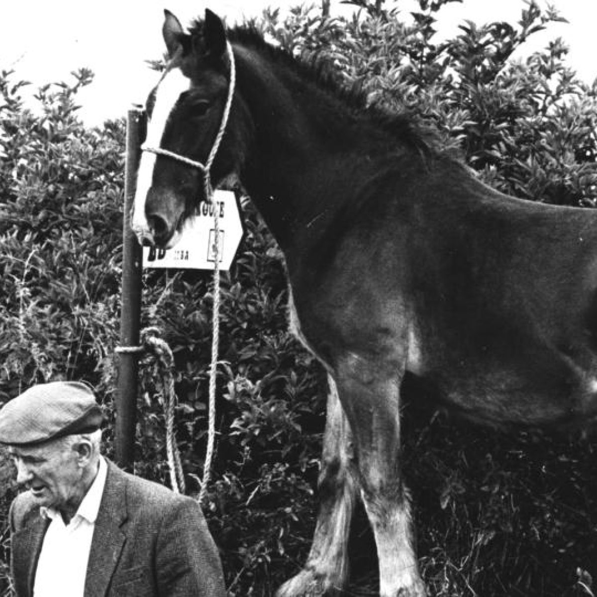 The Times We Lived In: High horses at fair day in Muff