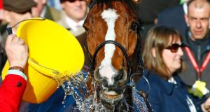 Faugheen is cooled down after winning the 15.20 Champion Hurdle Challenge Trophy. Photograph: Reuters / Eddie Keogh