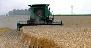 Harvest time: innovations will be needed as the global demand for grain is expected to increase by 40 to 60 per cent over the next 30 years because of population growth and other trends. Photograph: Reuters/Jim Young