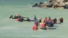 Twelve pilot whales die after becoming stranded in Bunbury harbour in Western Australia despite the efforts of local people and wildlife experts to refloat them. Video: Reuters