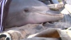Free again: stranded dolphins rescued from lake