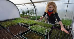 Kitty Scully, head kitchen gardener at Airfield Farm in Dundrum, in one the polytunnels. Photograph: Alan Betson