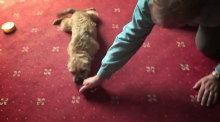 UK election candidate posts video of dog being dragged across carpet