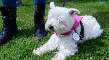 Dogs For Love: dog owners support the Yes campaign in Dublin