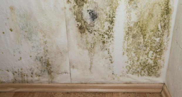 Mould growth in Council homes