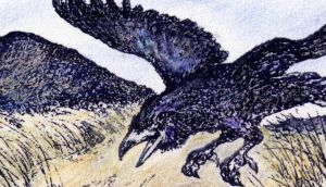 Territorial: a raven's skirmishes can be claw to claw. Illustration: Michael Viney