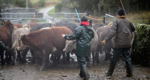Preliminary analysis of the Teagasc survey shows family farm income increased by 6 per cent in 2014, bringing the average farm income to €26,974. This does not include off-farm income, and the research found 51 per cent of farm households had an off-farm income. File photograph: Jeff J Mitchell/Getty Images