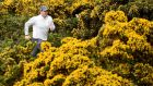 Rory McIlroy runs through the gorse during the pro-am event prior to The Irish Open at Royal County Down Golf Club. Photo:  Ross Kinnaird/Getty