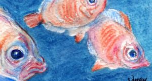 "Boarfish: ""a special gift from a warming ocean"". Illustration: Michael Viney"