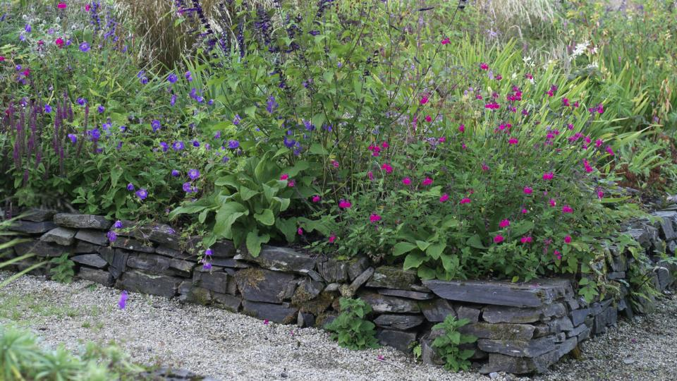 SALVIA HOT LIPS GOOD FOR POLLINATORS CONTAINER GARDEN PERENNIAL