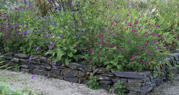 Image result for Growing Salvia