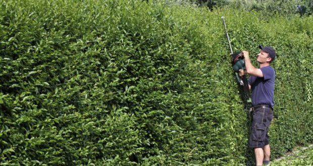 How can i get my neighbour to cut his leylandii hedge there is no legislation in ireland regulating the height of trees or hedges and there is spiritdancerdesigns Image collections