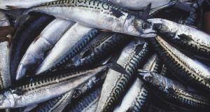 Dumping pelagic fish  such as mackerel herring and  horse mackerel at sea has been banned in the EU since January
