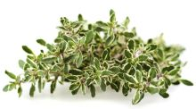 The Yes Woman: I'm sorry for killing you, my darling lemon thyme