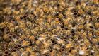 Pedestrians in Dublin's north inner city were forced to flee from North Frederick Street in Dublin  as a swarm of bees descended onto the street