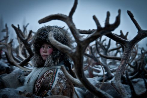 Nenet Woman I, by Lexi Novitske, United States. a woman from Russian Siberia selects reindeer from h