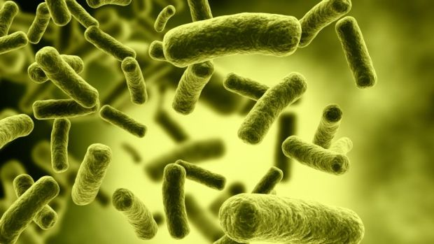 UCC scientists are examining how bowel bacteria can affect an individual's mental health. File photograph: Getty Images/iStockphoto