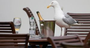 A seagull at the British Open in Scotland. Photograph: Paul Childs/Reuters
