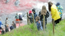 Protesters film slaughter of hundreds of whales in the Faroe Islands