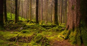 During the year, Coillte planted 15 million trees on 6,200 hectares of land