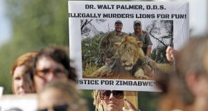 Protesters gather outside Dr Walter James Palmer's dental office in Bloomington, Minnesota, after Palmer reportedly paid $50,000 to track and kill Cecil, a black-maned lion, just outside Hwange National Park in Zimbabwe. Photograph: Reuters
