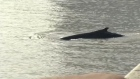 Sightseeing: Whale makes a splash in luxury Buenos Aires dockland