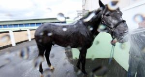 A horse gets a dousing in water ahead of the Discover Ireland Dublin Horse Show at the RDS. Photograph: Stephen Collins/Collins Photos