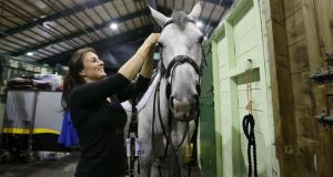 Lisa Bruton from Malahide attends to her horse ahead of the Discover Ireland Dublin Horse Show in the RDS in Dublin.   Photo: Sam Boal/Rollingnews.ie