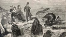 'A large and frightening sea monster seen by several people off the coast of Kilkee, Ireland'. Image from The Days' Doings, 1871. Photograph: Mary Evans Picture Library in London