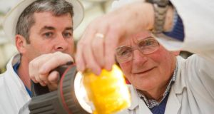 Honey judge Jim Power and judge steward examining entries in the honey section of the Horticulture Pavilion at the 2015 Tullamore Show and AIB National Livestock Show. Photograph: Jeff Harvey