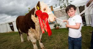 Darragh Fitzgerald from Moate with Griana Oscar, Hereford All Ireland Bull of the Year, at the 2015 Tullamore Show and AIB National Livestock Show. Photograph: Jeff Harvey